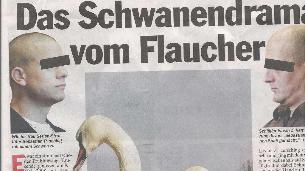 Bachelor Schwan
